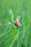 Salvage orchid. In green grass Stock Photo