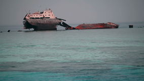 Salvage of ships at Sea. Tourist resort in Egypt, traveling on the sea, sightseeing animals and sunken ships stock video