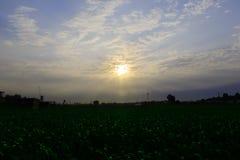 Salvaje con el sol Fotos de archivo