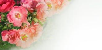 Salvaje subieron, las rosas de perro - frontera, marco, guirnalda - tarjeta de felicitación del panorama, carte cadeaux - fondo,  Imágenes de archivo libres de regalías