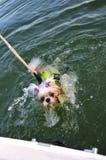 Salvamento do filhote de cachorro de Shih Tzu fotos de stock royalty free