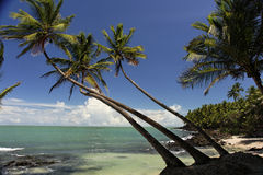 The salvation islands, french Guyana. View from the salvation islands, french Guyana Stock Photography