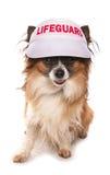 Salvavidas del perro Imagen de archivo libre de regalías