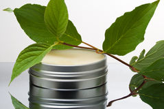 Salve container. Fresh plant lying on opened salve container Stock Photo