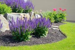 Salvia花和岩石护墙 免版税库存照片