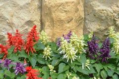 Salvia auf Steinwandhintergrund Stockfotografie