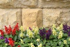 Salvia auf Steinwandhintergrund Lizenzfreies Stockbild