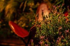 Salvia-Blumen im warmen Licht auf farbigem Innenraum in gedämpftem Licht mit einfachem rotem Lederstuhl auf der Rückseite lizenzfreies stockfoto