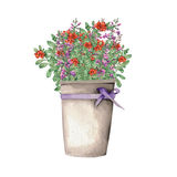 Salvia and cowberry in a bucket Royalty Free Stock Photography