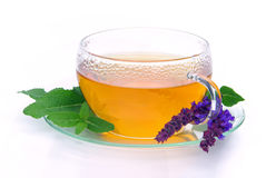 Salvia del tè Fotografia Stock Libera da Diritti