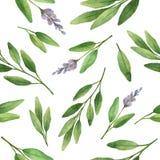 Salvia disegnata a mano dell'erba del modello senza cuciture di vettore dell'acquerello Fotografia Stock