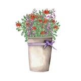 Salvia e airela em uma cubeta Fotografia de Stock Royalty Free