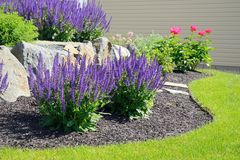Salvia Flowers and Rock Retaining Wall Royalty Free Stock Photos