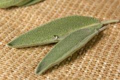 Salvia leaves on sacking Stock Image