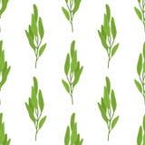 Salvia, modello senza cuciture dell'erba di salvia Stile piano del fumetto Illustrazione di vettore Fotografia Stock