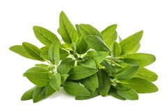 Salvia officinalis prudente fotografia stock