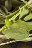 Salvia organica verde cruda Fotografia Stock Libera da Diritti