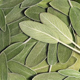 Salvia (sage, also called garden sage, or common sage). Background Stock Photography