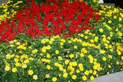Salvia in straatlandschap stock foto