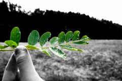 Salvo il verde immagini stock