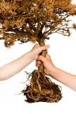 Salvo l'albero! Fotografia Stock