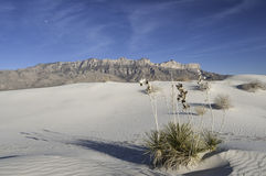 Salz-Becken-Dünen in Guadalupe Mountains National Park Stockbilder