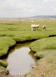 Salz Marsh Fields Lizenzfreies Stockfoto