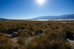 Salz-Tal und trockene Vegetation, Death Valley Stockfotografie