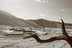 Salz-Wanne Namibia Stockfoto