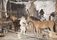 Salzbergwerk-Pferde Stockfotos