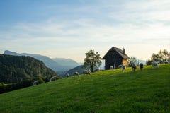 Salzbourg, Heuberg, troupeau des moutons sur le pré, montagnes à l'arrière-plan photo libre de droits