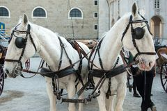 Salzburg, cabine door paarden, riep Fiaker, in de oude stad in de zomer stock foto's