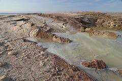 Salze des Toten Meers Lizenzfreie Stockbilder