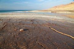 Salze des Toten Meers Lizenzfreie Stockfotografie