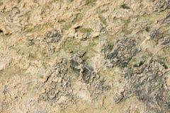 Salzen Sie Sammlung am Salzbergwerk von Trapani in Sizilien Lizenzfreies Stockfoto