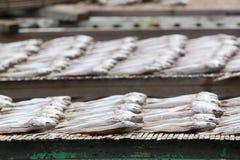 Salzfische HONG- KONGTai O Stockbilder