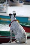 Salziger Hund Stockfotografie