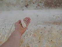 Salzküste des Toten Meers stockfotos