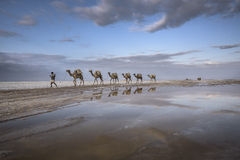 Salzkarawane von Karoum-Gummilack in Äthiopien lizenzfreies stockbild