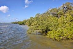 Salzwasser-Mangroven entlang der Küstenlinie stockfotografie