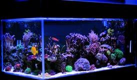 Salzwasseraquarium, Korallenriffbehälterszene zu Hause Lizenzfreies Stockfoto
