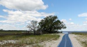 Salzwassersumpf, -bäume und -bahn zu einer Golfküstenbucht Lizenzfreie Stockfotografie