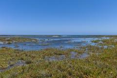 Salzwiesen Kanarische Inseln stockbild