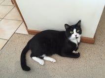 Sam η γάτα Στοκ εικόνες με δικαίωμα ελεύθερης χρήσης