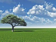 sam cl drzewo Zdjęcie Stock