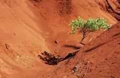 sam czerwonego drzewa canyon Obrazy Royalty Free