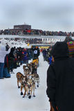 Sam Deltour begins the Yukon Quest. Thousands of people watch Sam Deltour's dog team charging forward ambitiously at the beginning of the Yukon Quest sled dog Royalty Free Stock Images