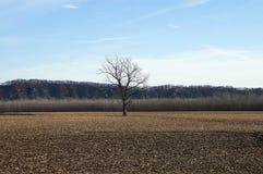 sam drzewo Obrazy Royalty Free
