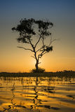 sam drzewo Zdjęcia Royalty Free