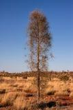 sam drzewo Zdjęcie Royalty Free